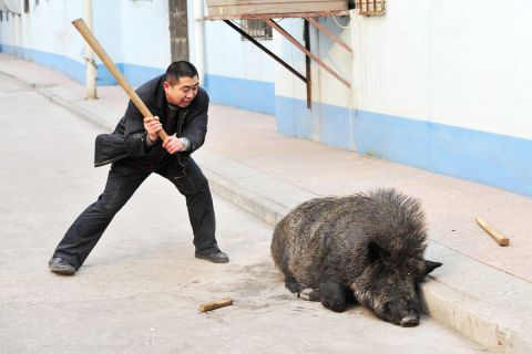 china-police-vs-wild-boar-04